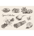 Set hand drawn spices and herb collection vector image