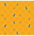 pattern of the bee on honeycombs background vector image