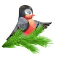 image of a bullfinch on a spruce branch vector image