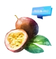 Passion fruit hand drawn watercolor on a white vector image vector image