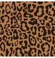 Leopard seamless pattern design background vector image