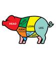 pork vector image