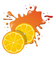 splash concept design vector image