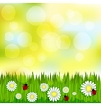 Spring blurred pattern with grass and chamomile vector image