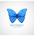 Butterfly logo design template Insect or vector image