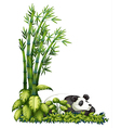 A sleeping panda vector image