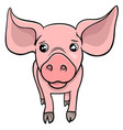 pig or piglet cartoon character vector image vector image