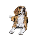 Curious Beagle vector image