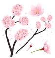 prunus serrulata - pink cherry blossom sakura vector image