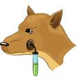 Pavlov s Dog Experiments vector image
