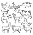 vintage farm animals farming in hand vector image