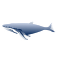 great sperm whale vector image