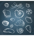 Set of shells on chalkboard vector image