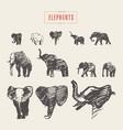 set realistic elephants hand drawn sketch vector image