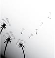 Blow Dandelion on white vector image