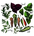 set of hand drawn spices and herbs vector image