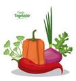 fresh vegetable pepper onion lettuce menu vector image