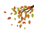 Fall Leaves on Branch3 vector image