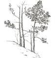 pine trees at hill vector image vector image