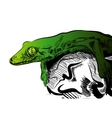 Picture with lizard Graphics on white vector image