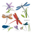 set of various dragonflies in different poses vector image