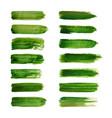 green labels green watercolor brush vector image