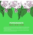 Pomegranate for postcard invitation vector image