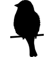 Sparrow on a wire vector image