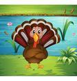 A turkey standing in the riverside vector image vector image