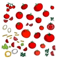 Tomato vegetables icons with spicy herbs vector image