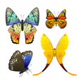 colorful butterflies with abstract decorative vector image