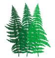 green fern background vector image