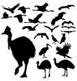 australian birds silhouettes vector image