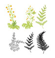 tropical summer leafs decorative vector image