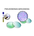 Pseudomonas aeruginosa bacterial inoculation vector image