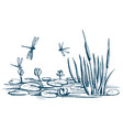 water lily and reeds on the pond vector image