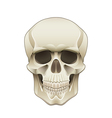 object skull vector image vector image