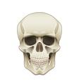 object skull vector image