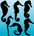 Seahorse silhouettes vector image vector image