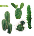 cactus plant exotic tropical summer background vector image