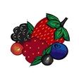 Ripe berries strawberries raspberries blueberries vector image