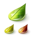 set of leaves - autumn and summer concept vector image