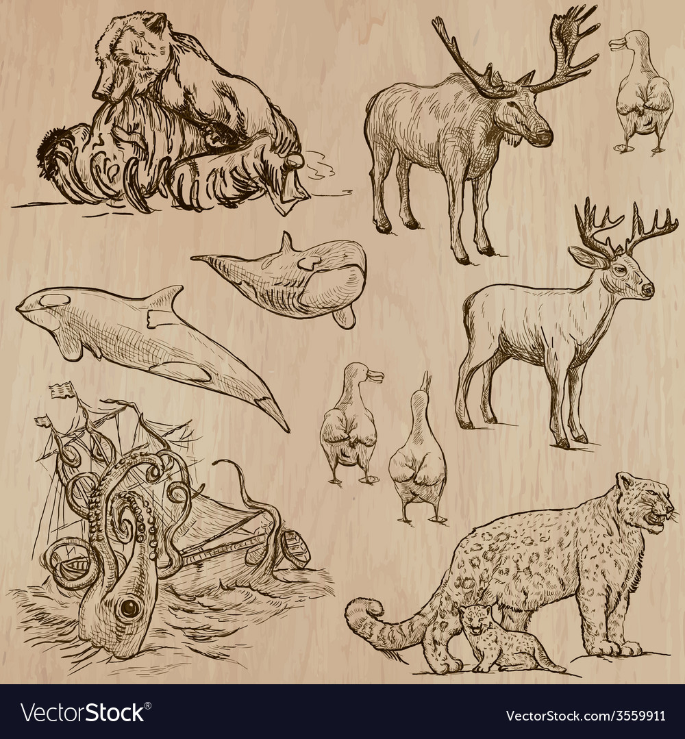 Animals around the world part 5 hand drawn pack vector