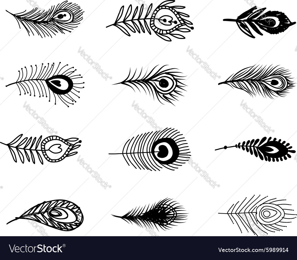 Peacock feather set for your design vector