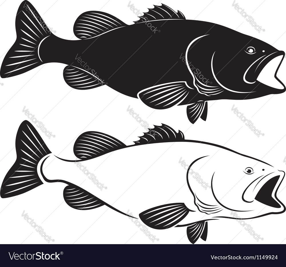 Fish bass vector