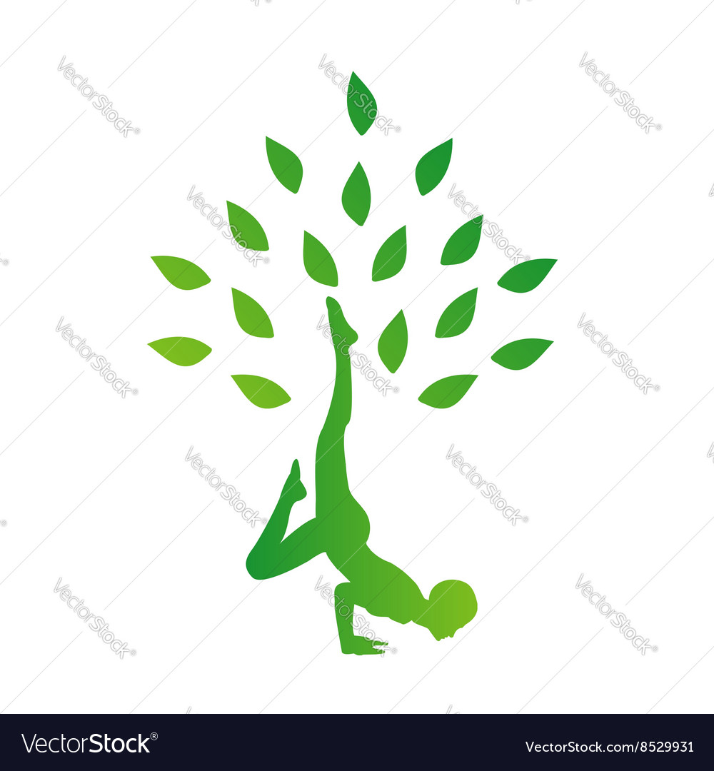 Person in yoga pose forming a healthy tree vector