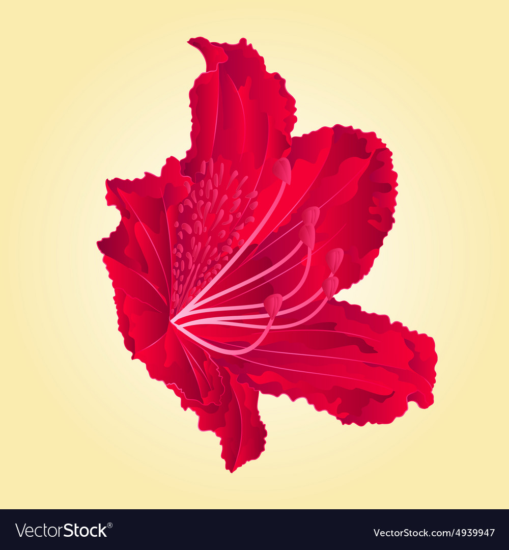 Red flower simple rhododendron mountain vector