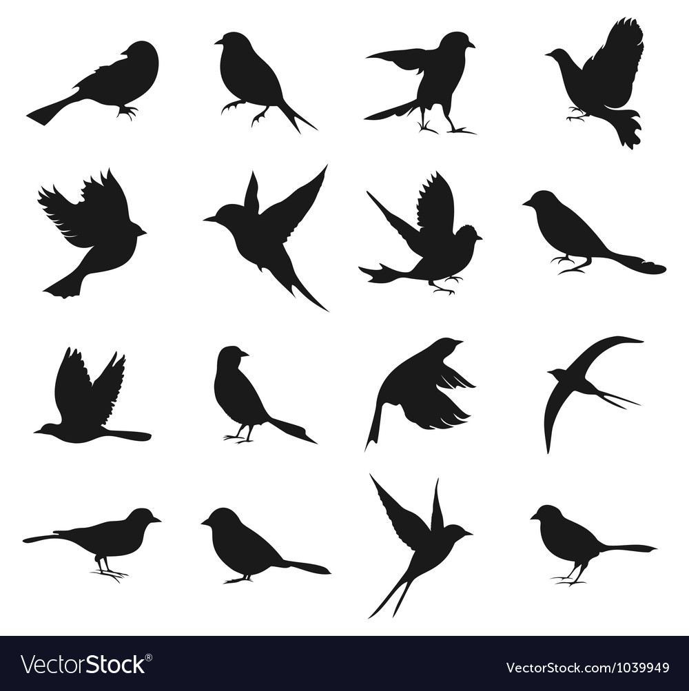 Silhouette of birds2 vector