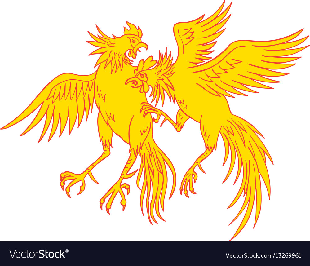 Cockfighting roosters cockerel drawing vector