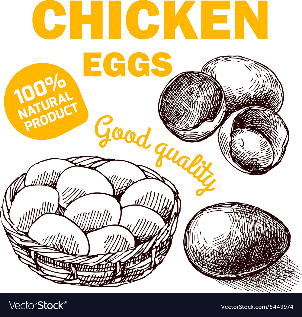 Eco farm chicken vector